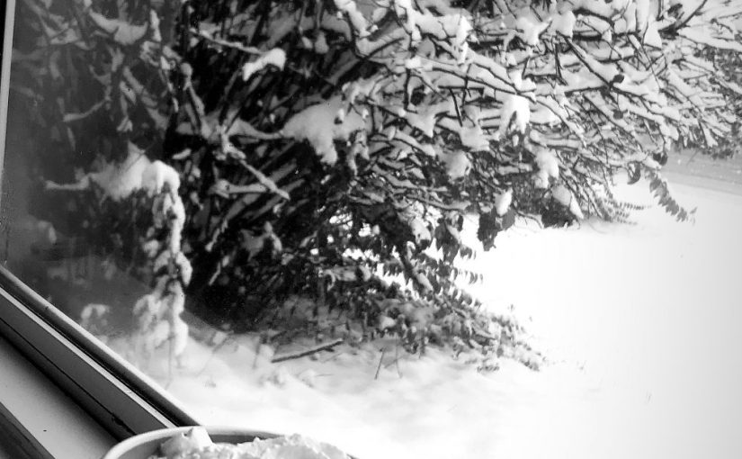 SNOW DAY!! ❄️